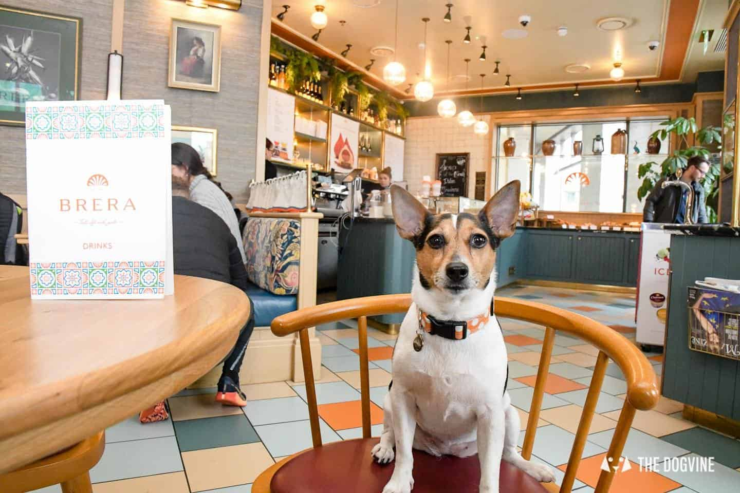 Dog-friendly Canary Wharf and Limehouse - Cafe Brera Riverside 2