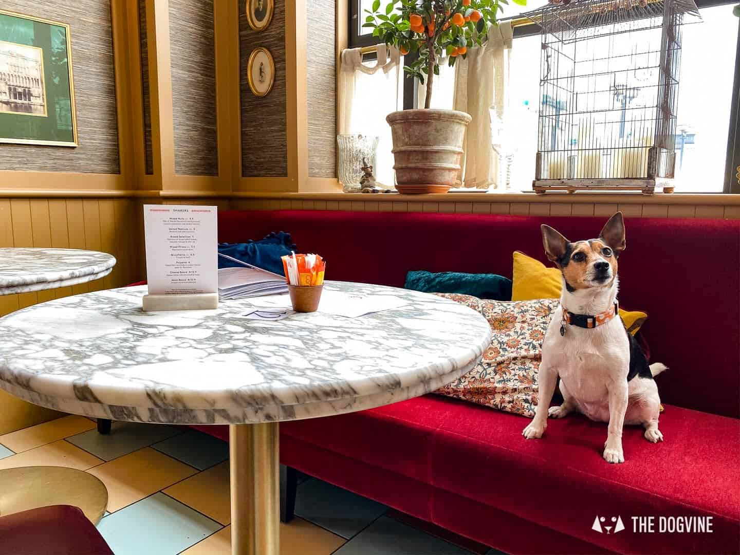 Dog-friendly Canary Wharf and Limehouse - Cafe Brera Riverside 3