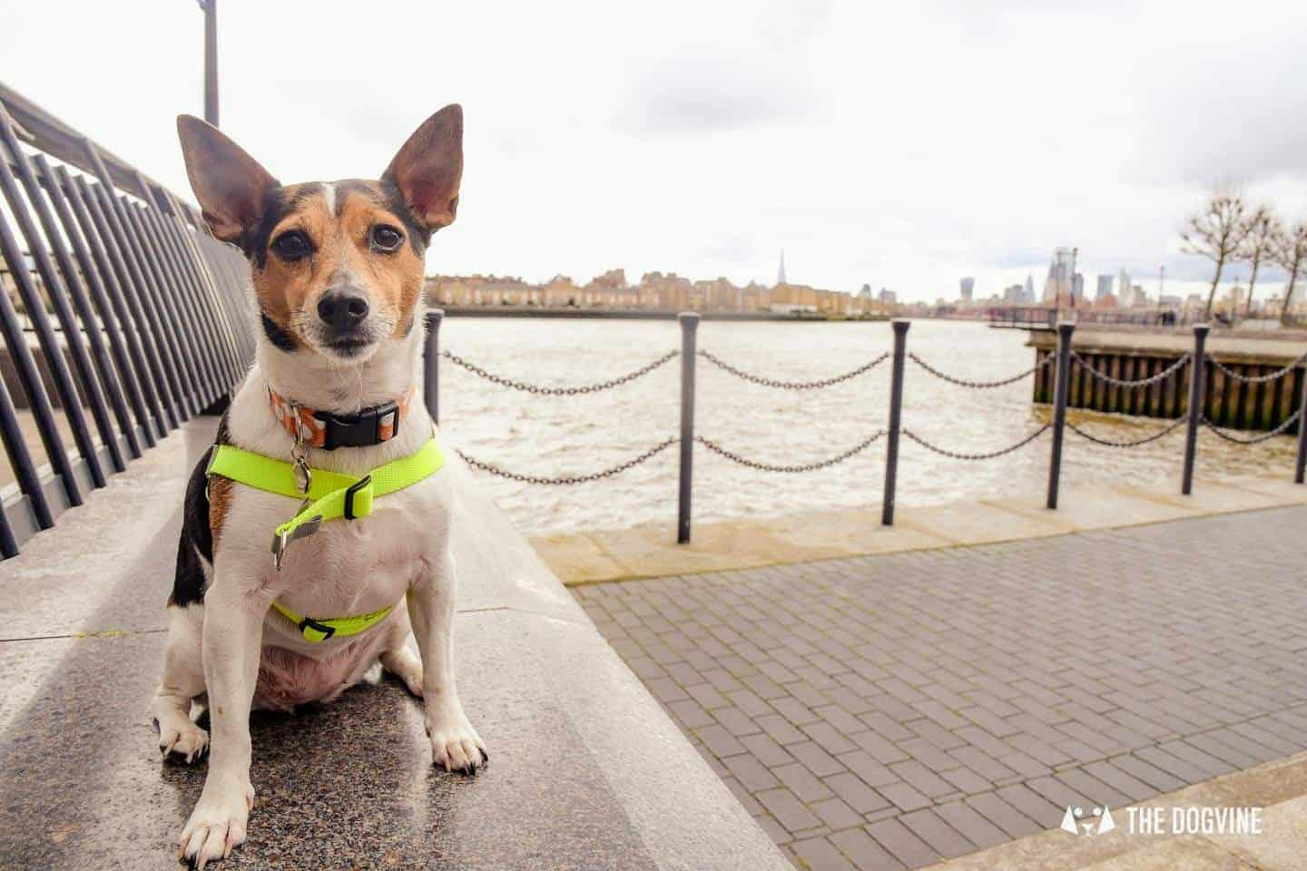 Dog-friendly Canary Wharf and Limehouse - Hattie 2