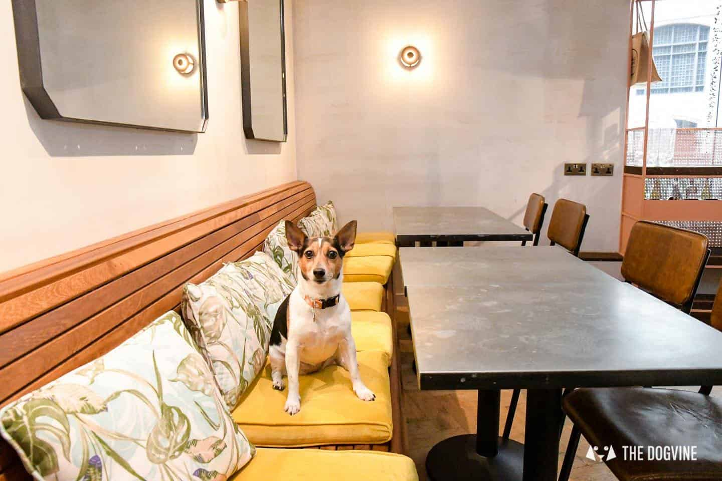 Dog-friendly Canary Wharf and Limehouse - The Humble Grape 1