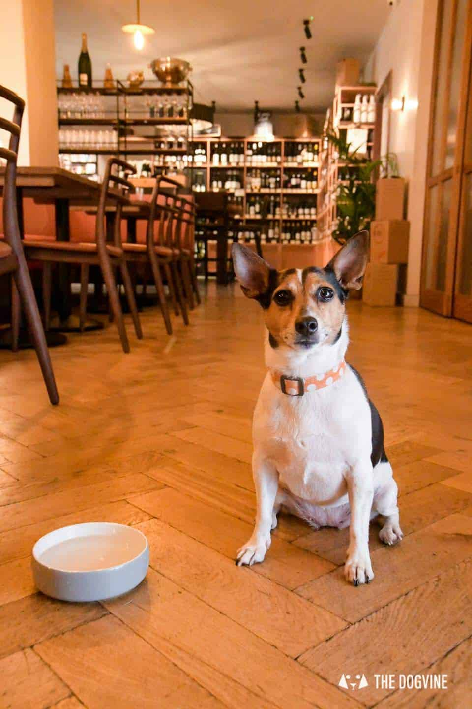 Dog-friendly Canary Wharf and Limehouse - The Humble Grape 2