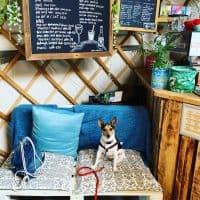 The Yurt Café