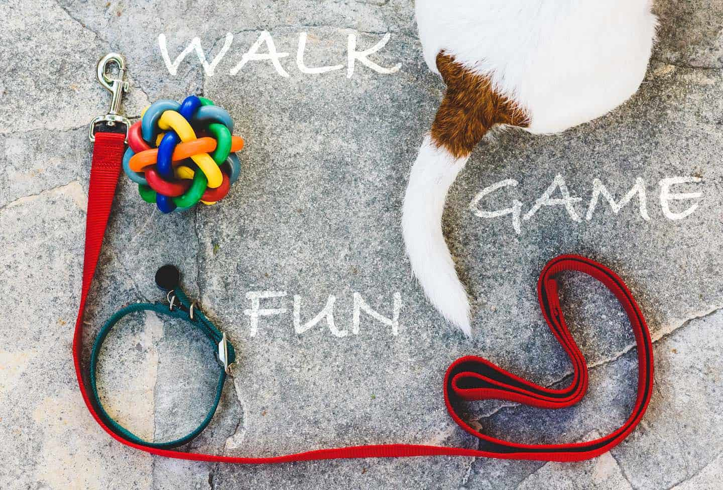 How To Entertain Your Dog At Home: 8 Free Canine Enrichment Resources
