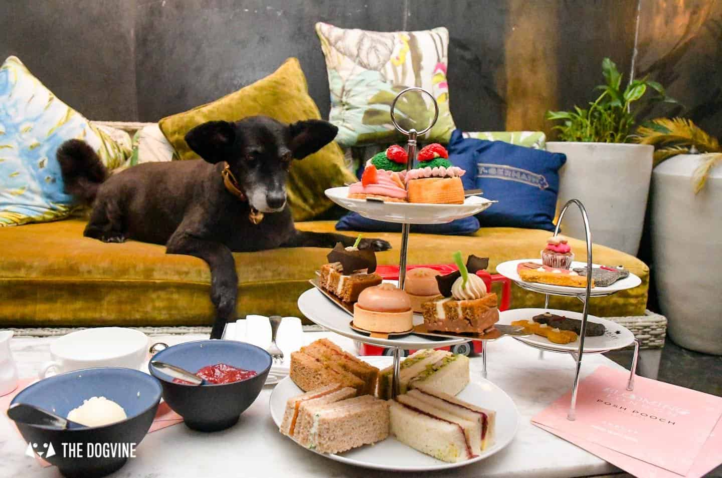 Radley Dog Afternoon Tea South Place Hotel 23