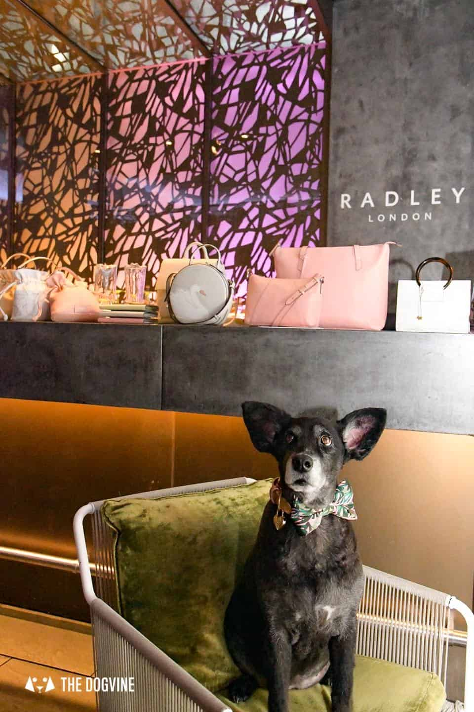 Radley Dog Afternoon Tea South Place Hotel 63