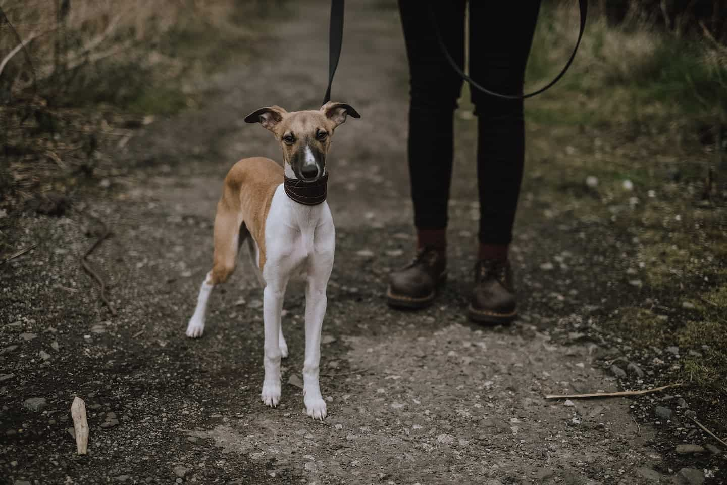London Support Groups for Dog Owners in Self-Isolation