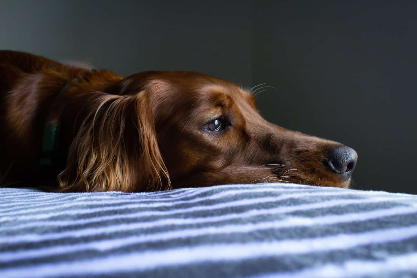 Support Groups for Dog Owners in Self-Isolation - Covid-19 Support Groups - Ryan Stone