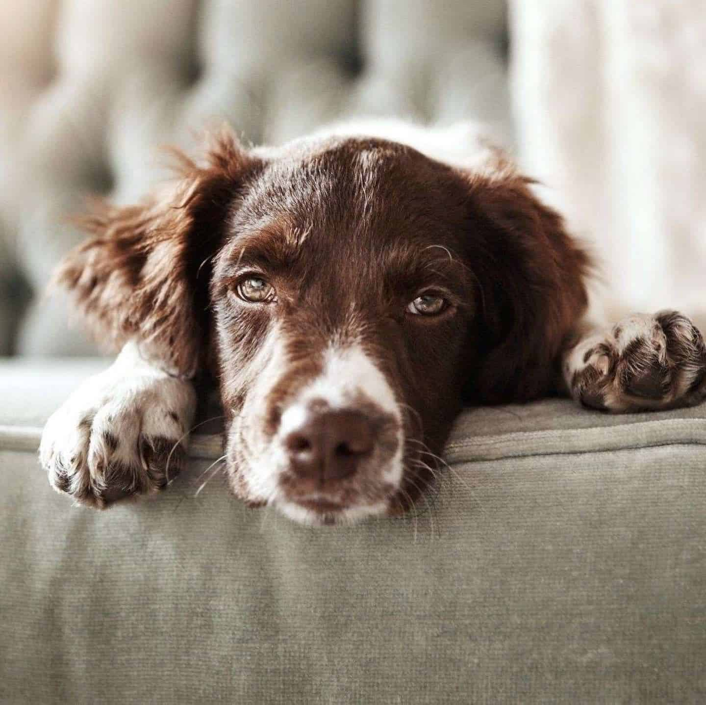 Support Groups for Dog Owners in Self-Isolation - Covid-19 Support Groups - Underdog International