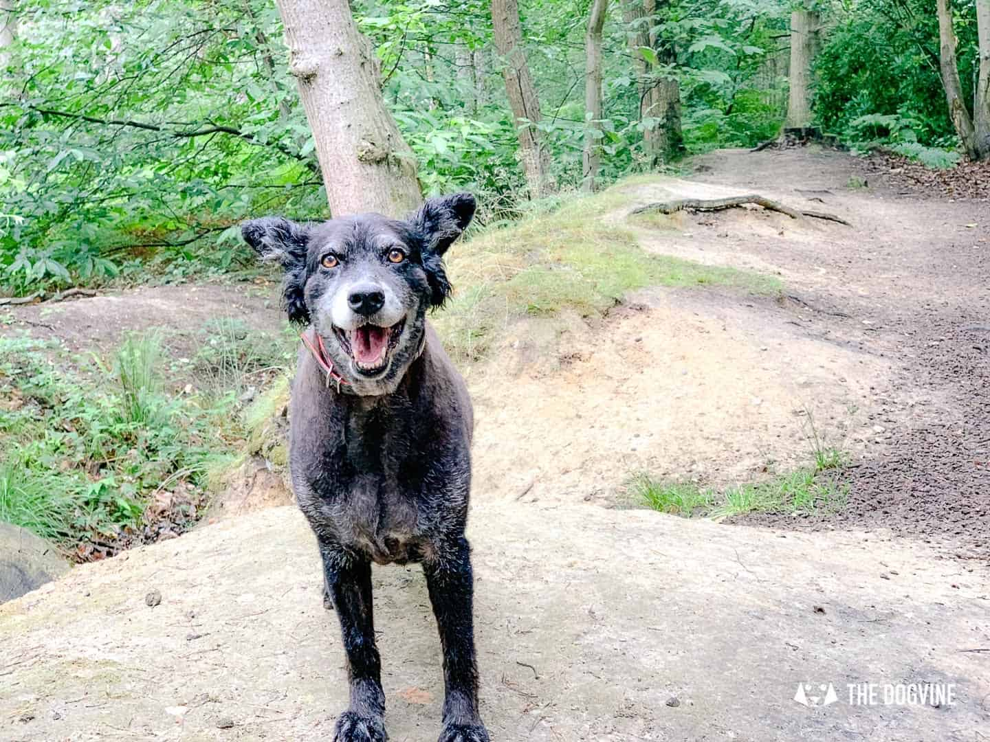 Support Groups for Dog Owners in Self-Isolation - London Dog Community Facebook Groups