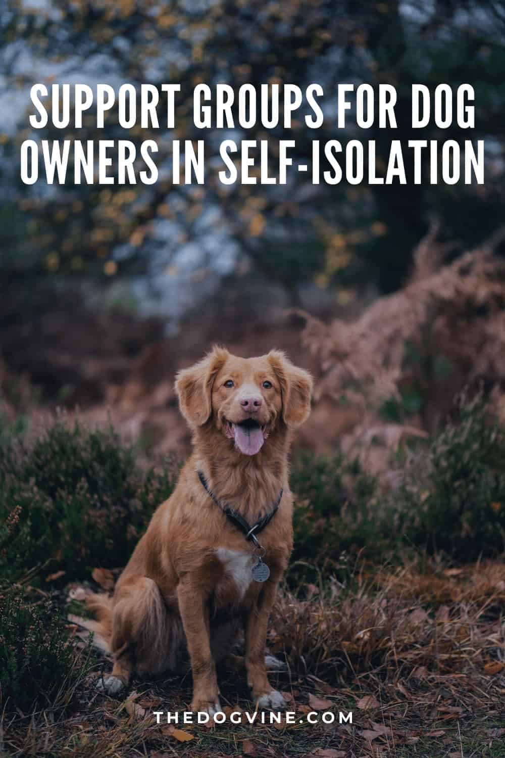 Support Groups for dog Owners in Self-Isolation - Covid-19 Support Groups UK