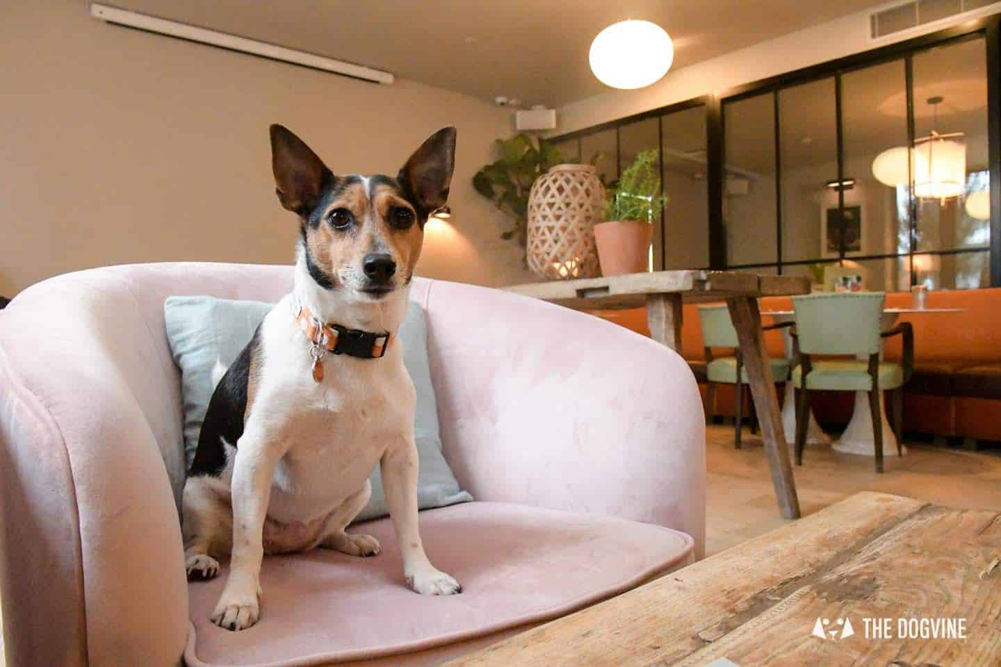 The Best of Dog-friendly Canary Wharf and Limehouse - No. 35 Mackenzie Walk 2