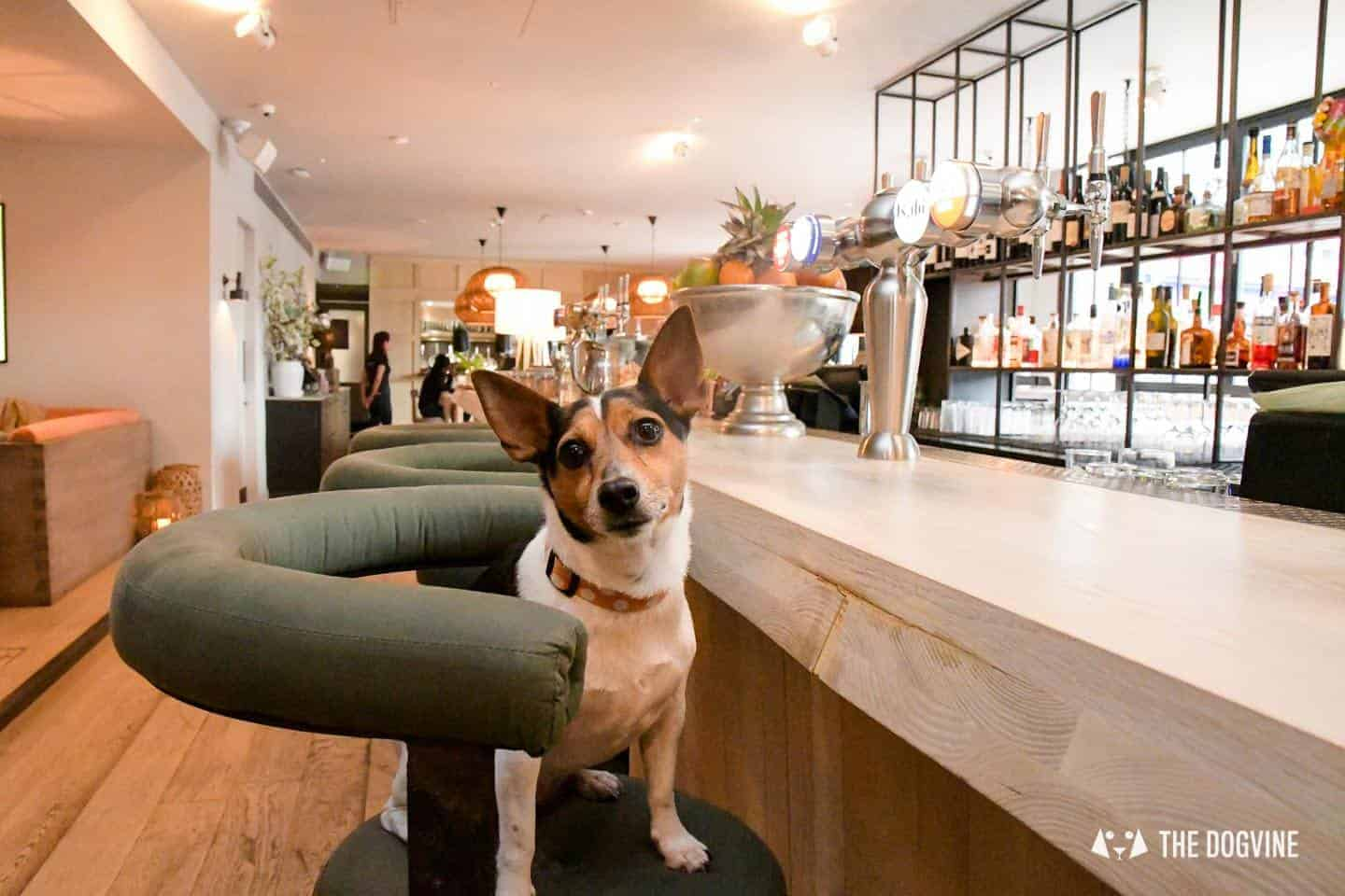 The Best of Dog-friendly Canary Wharf and Limehouse - No. 35 Mackenzie Walk 4