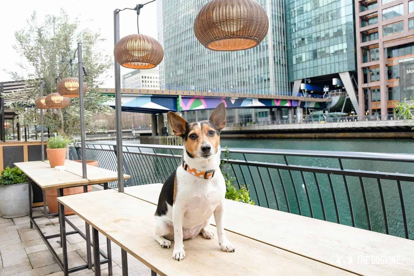 The Best of Dog-friendly Canary Wharf and Limehouse
