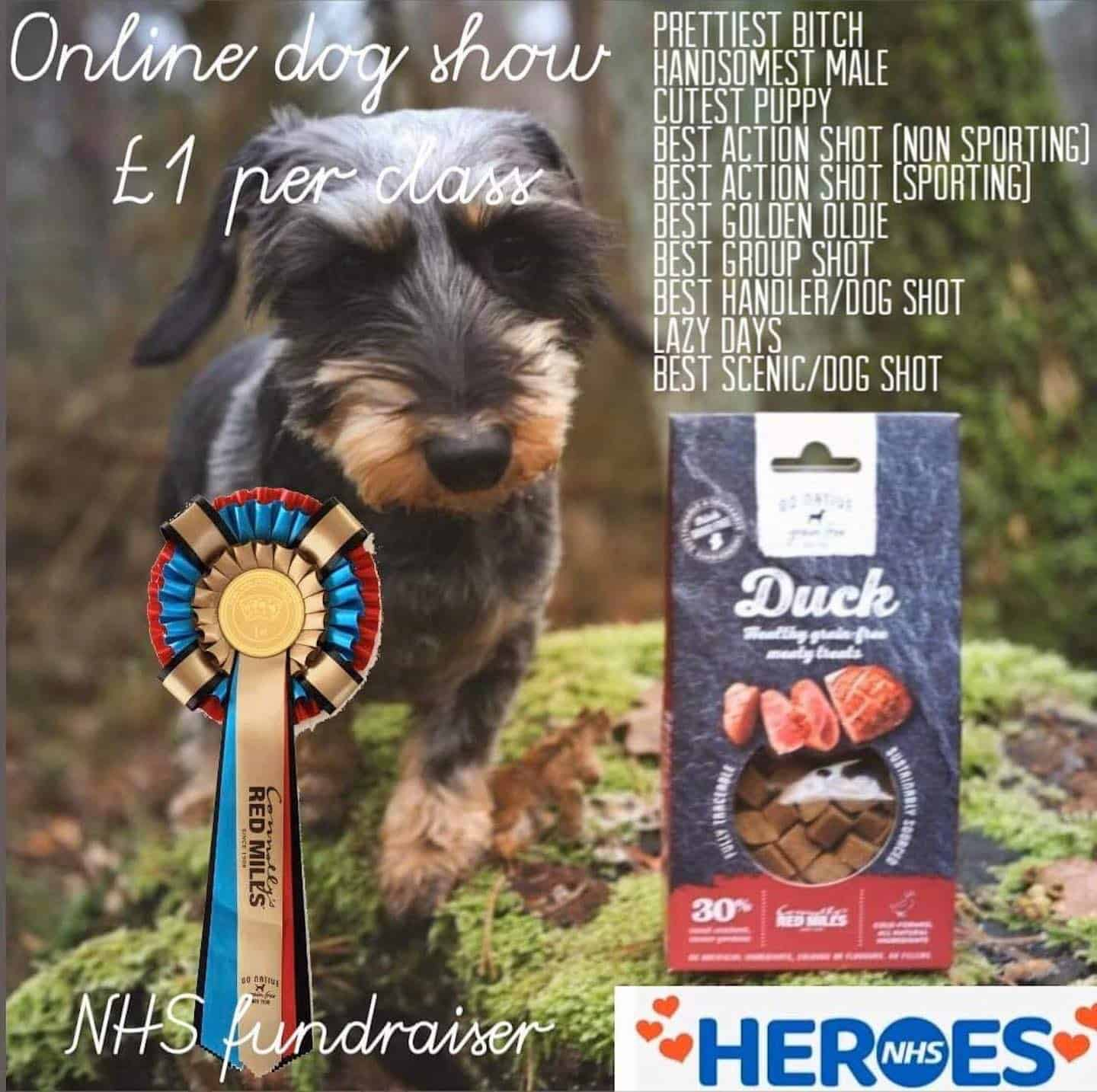 Aces Flyball Online Dog Show for NHS Heroes