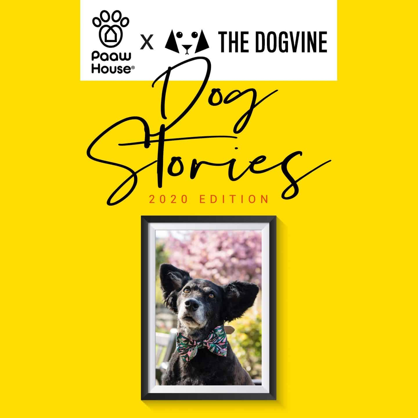 Dog Stories 2020 - Belinha - PAAW House - The Dogvine