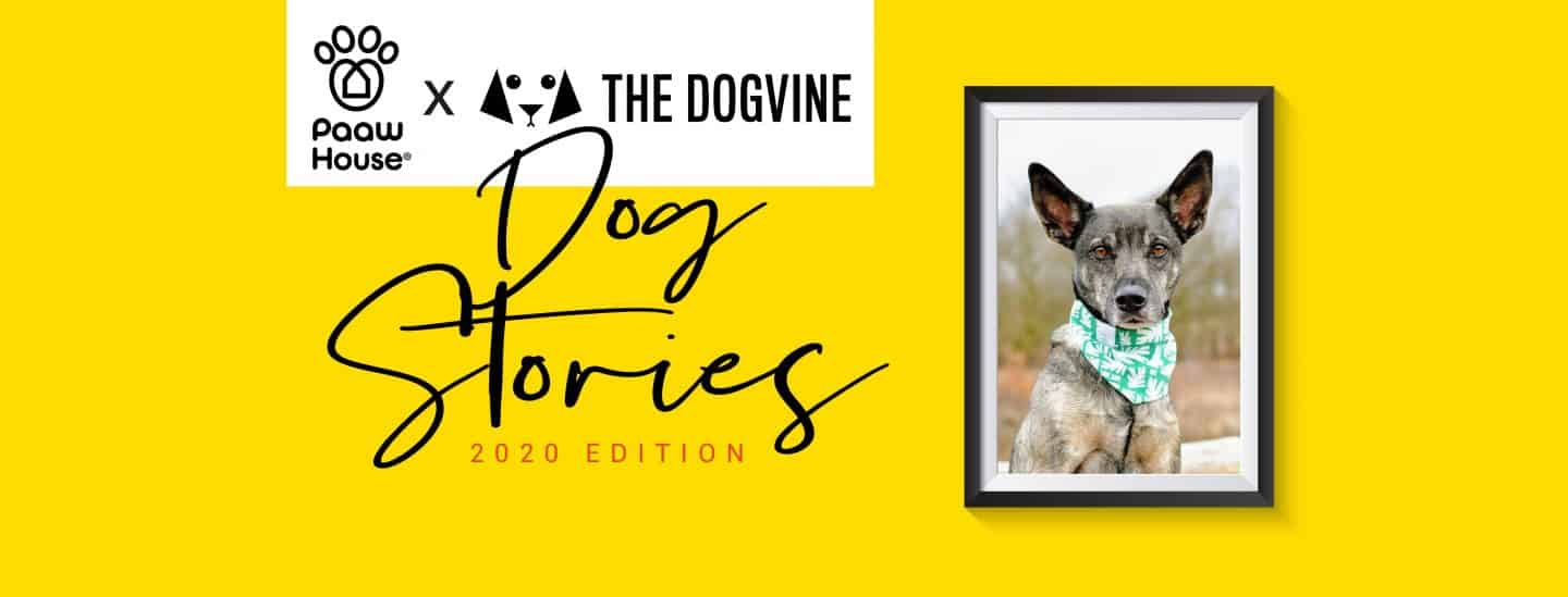 Dog Stories 2020 - Moleque