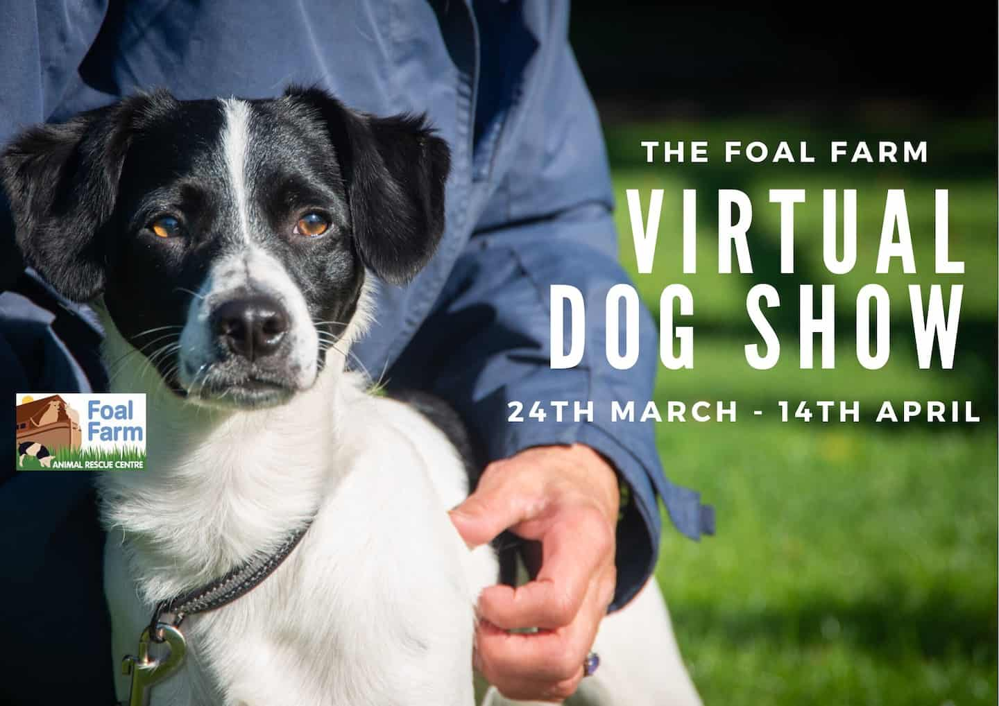 Foal Farm Virtual Dog Show