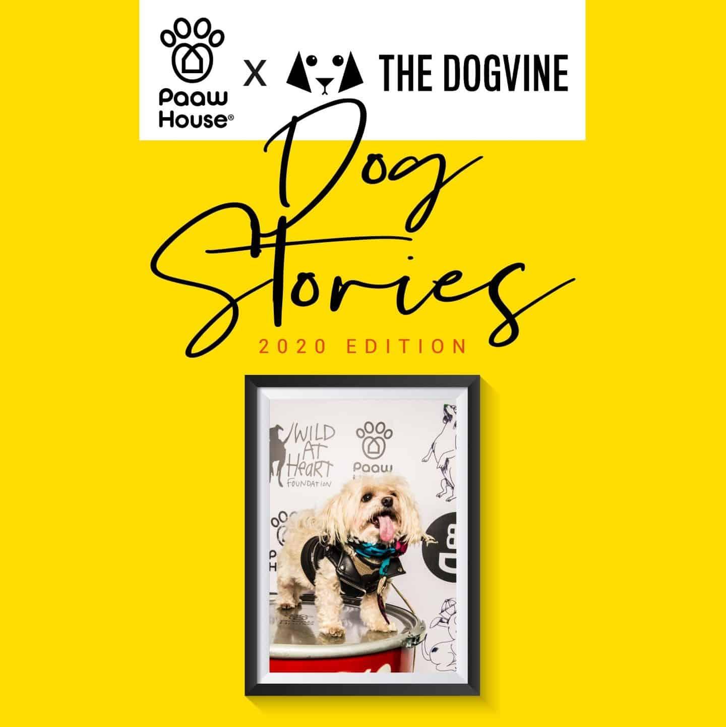Mr Zipper Dog About Town - Dog Stories 2020