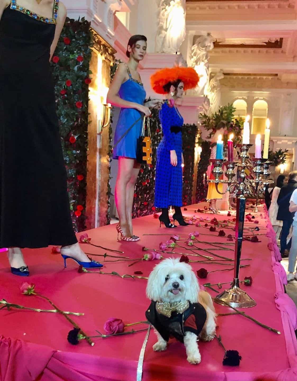 Mr Zipper The Dog About Town - London Fashion Week