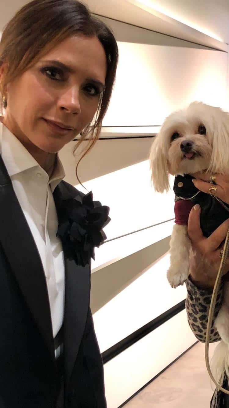 Mr Zipper The Dog About Town - Zipper Meets Victoria Beckham