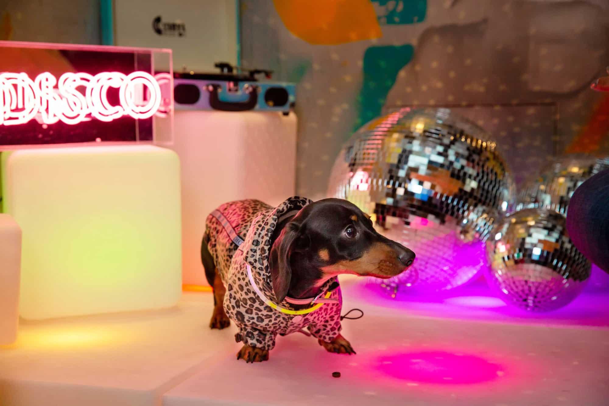 Virtual Dachshund Disco