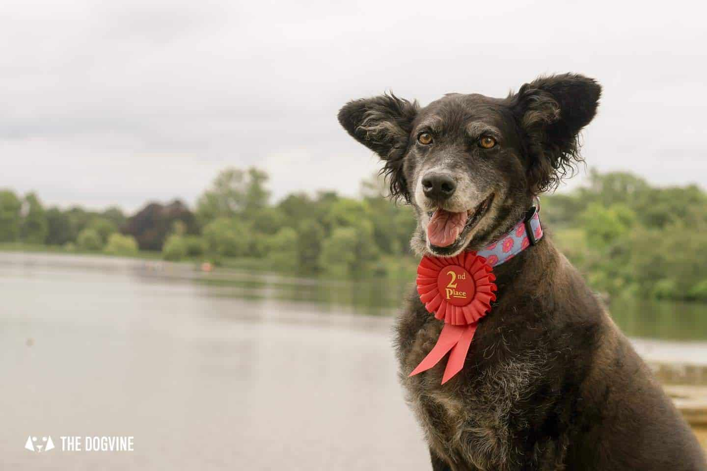 Virtual Dog Events - The Dogvine