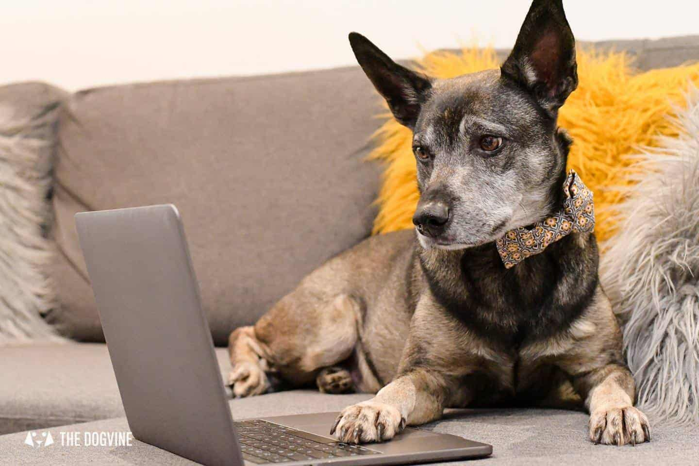 Virtual Dog Events You Can Join In Online 2