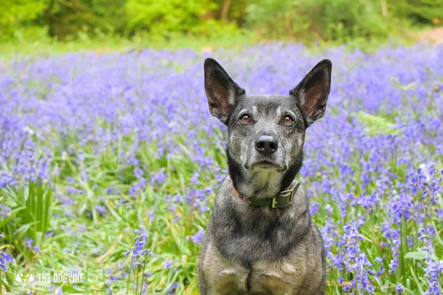 Sitting pretty in the Bluebells at Banstead Woods