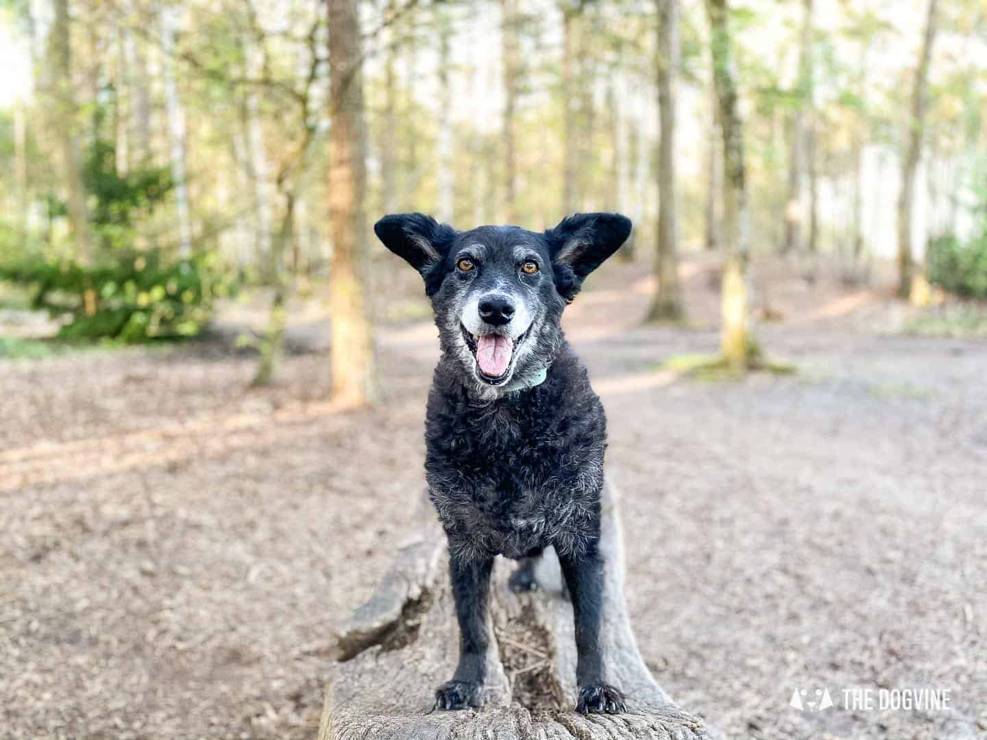 Esher Common Dog Walks Review