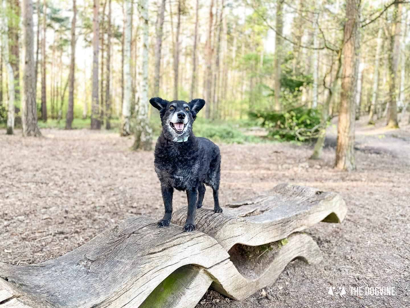 Exploring Esher Common walks with your dog
