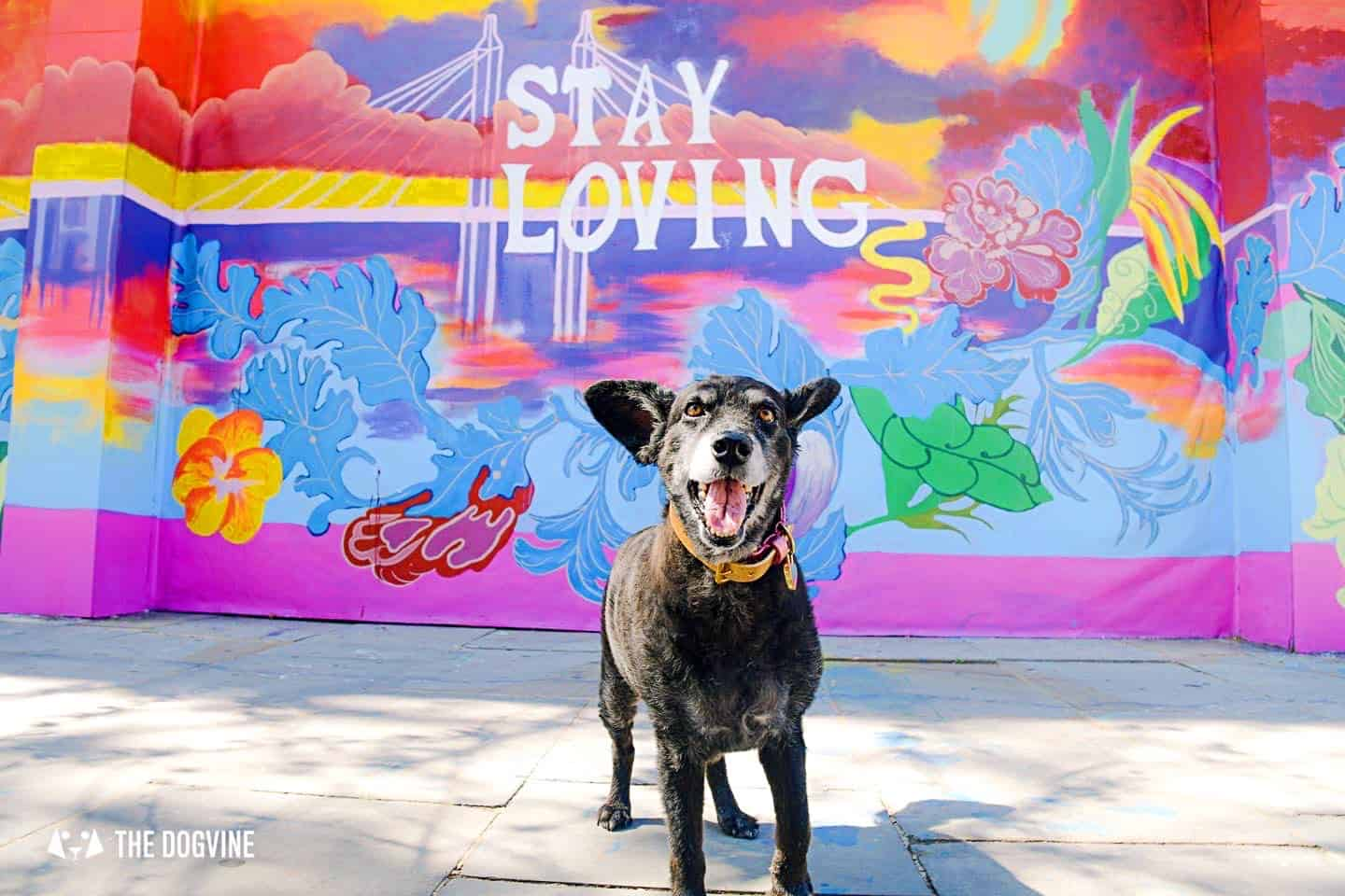 Celebrating Our Amazing Pets With The Petplan Pet Awards - Belinha in front of the Stay Loving Mural on Kings Road