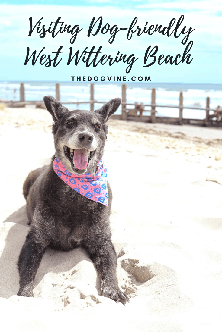 Beach Days With Your Dog At Dog-friendly West Wittering Beach