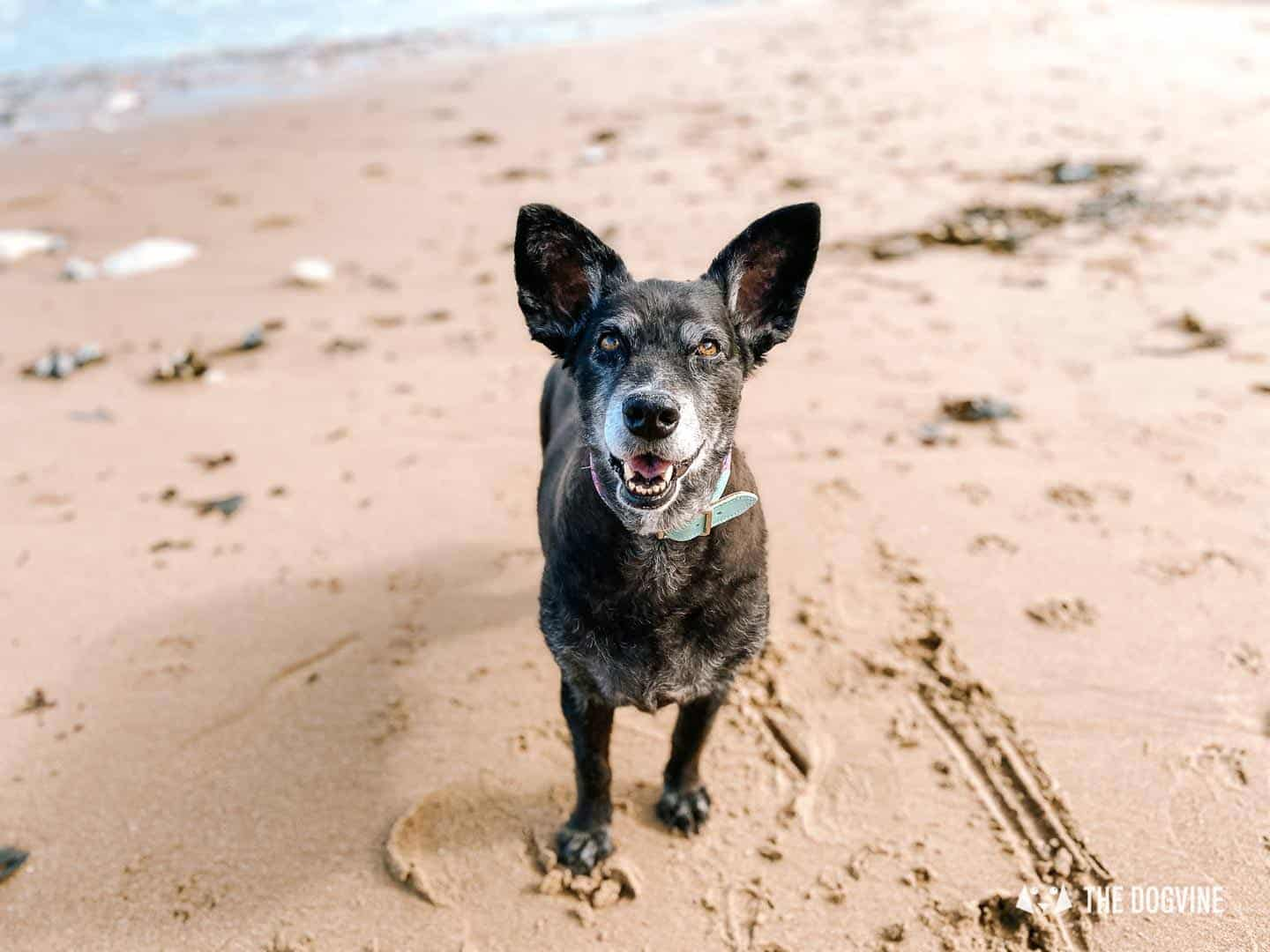 Beach days with your dog in Kent