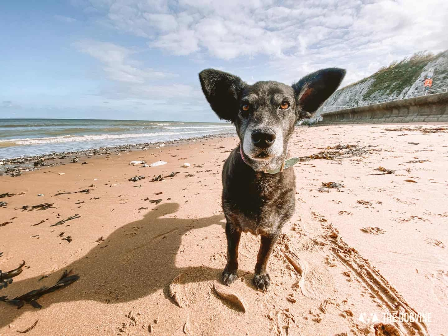 Dumpton Gap welcomes dogs on the beach all year round