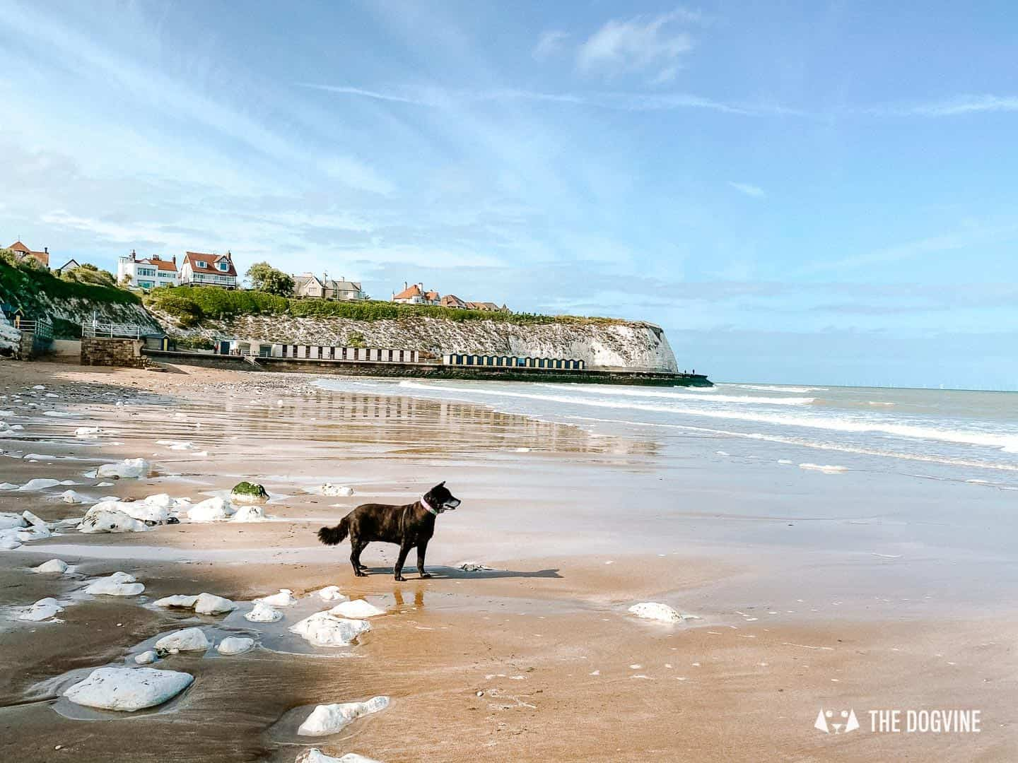 The dog-friendly beaches in Kent are best visited when the tide is heading out