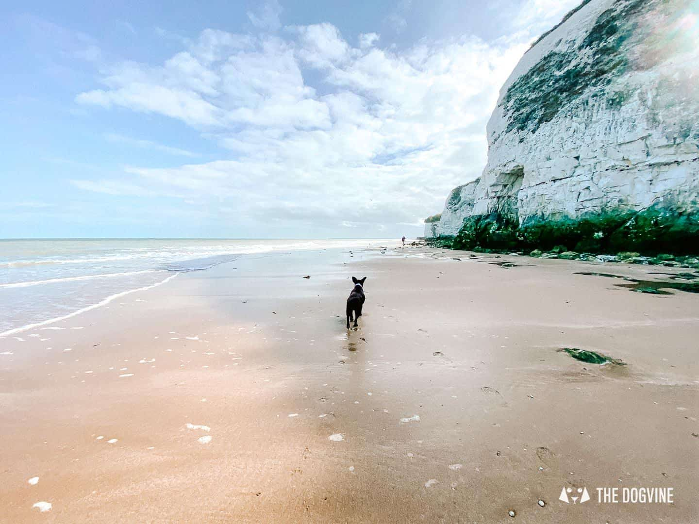 How to get to Kent's dog-friendly beaches