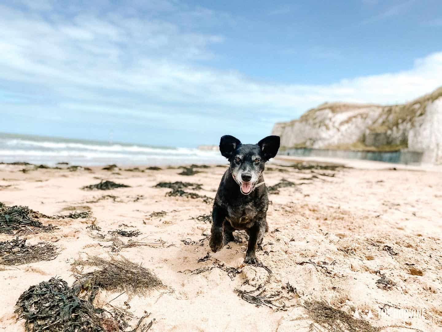 Belinha on the beach at Palm Bay - Dog-Friendly Beaches in Kent