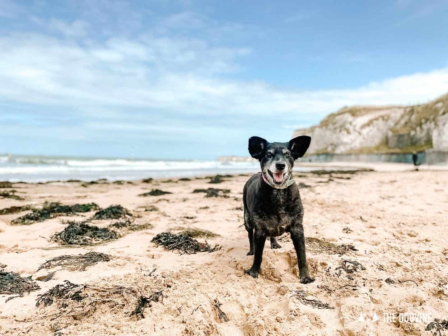 Tips for visiting Kent's dog-friendly beaches