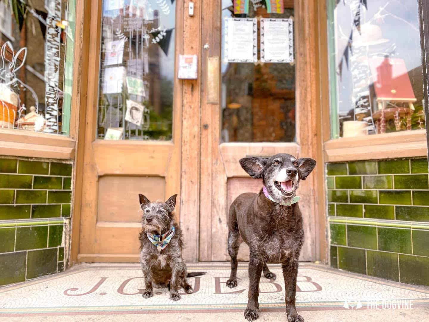Dog-Friendly Margate - Hiro and Wolf