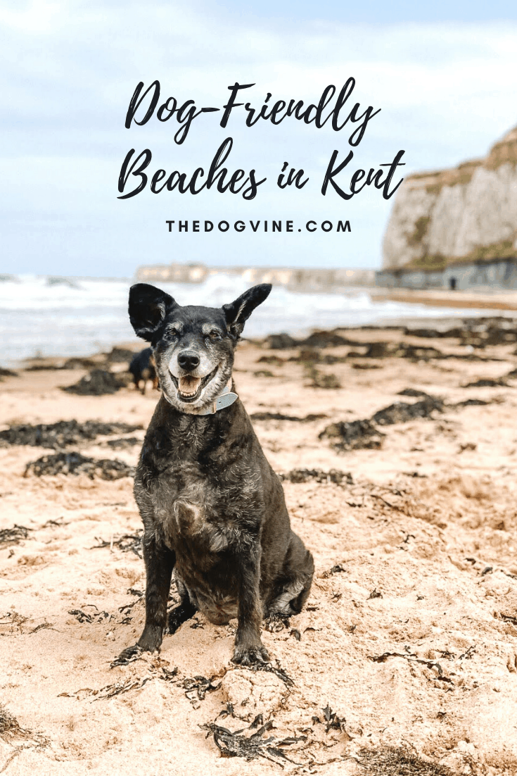 Dog-friendly Beaches in Kent You Can Visit With Your Dog - The Dogvine