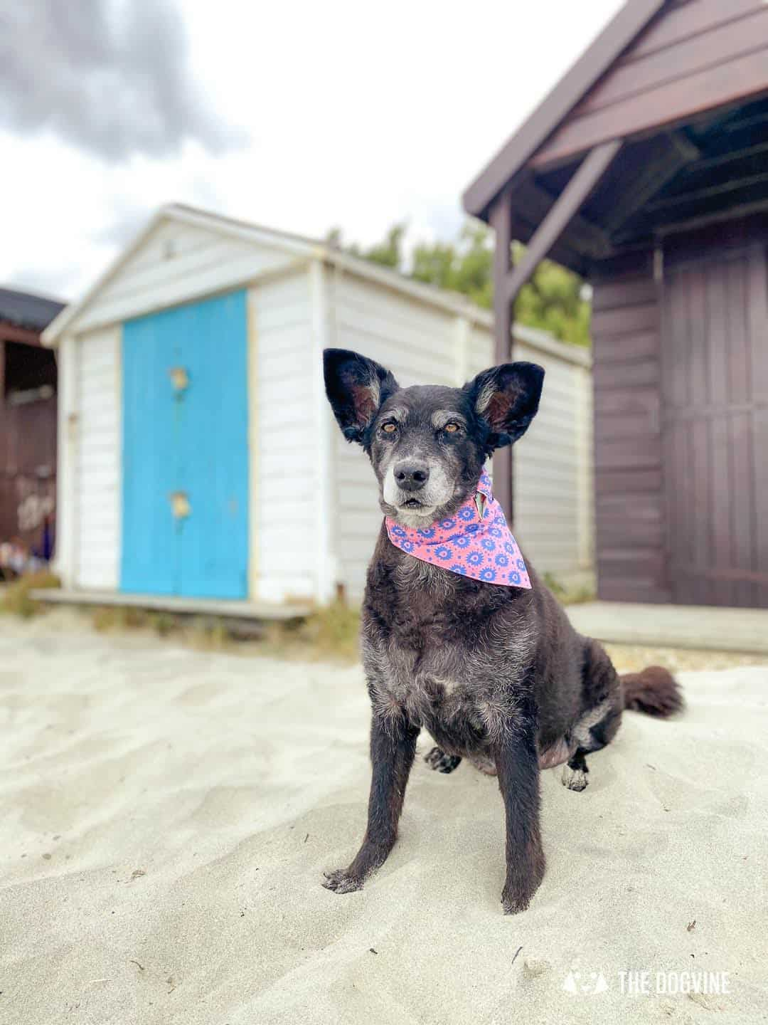 Dog-friendly West Wittering Beach Huts