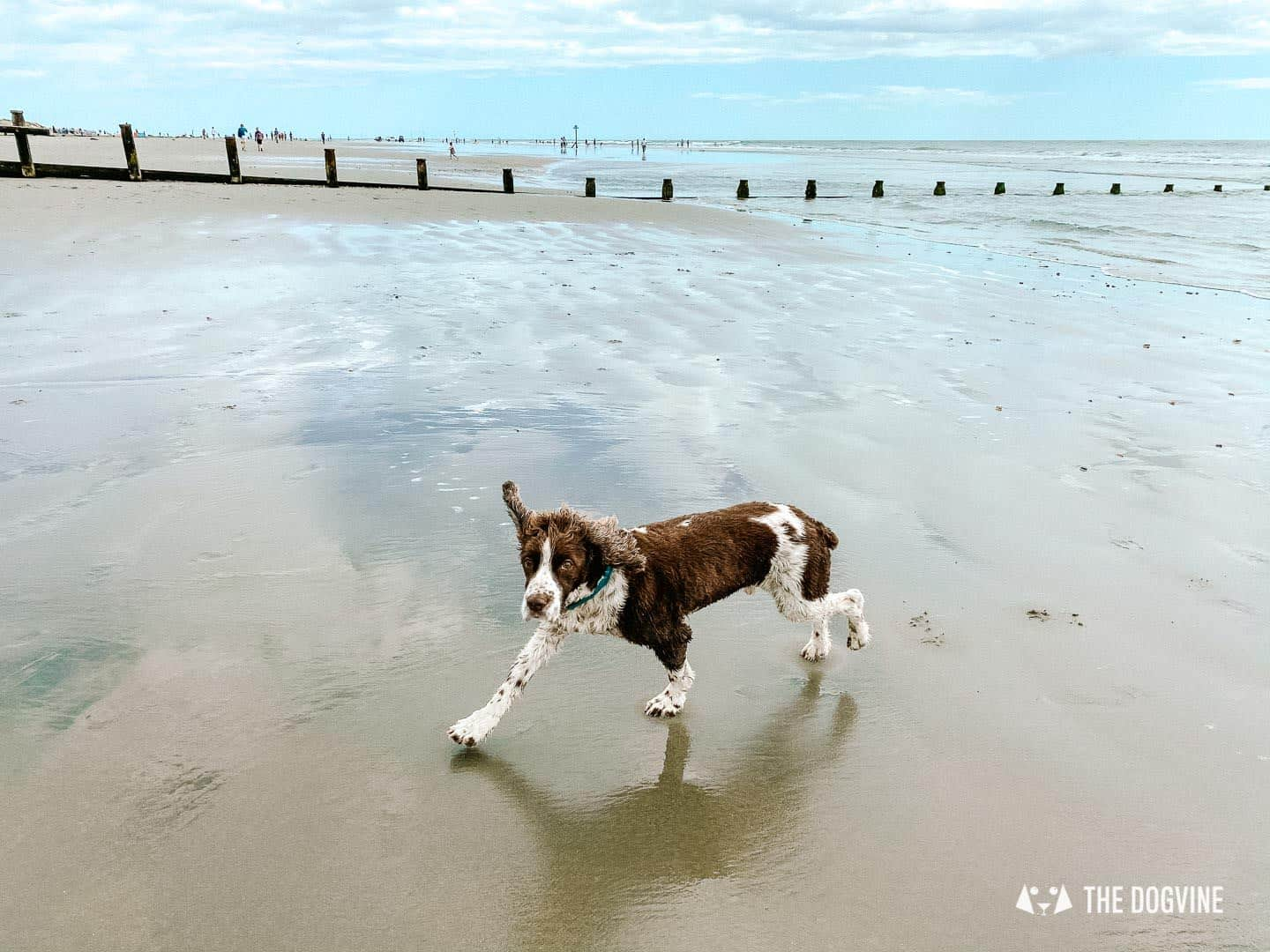 Dog-friendly West Wittering Beach - dogs on the beach