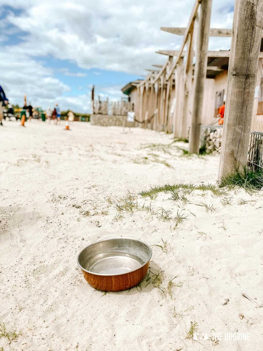 Dog-friendly West Wittering Beach facilities for dogs