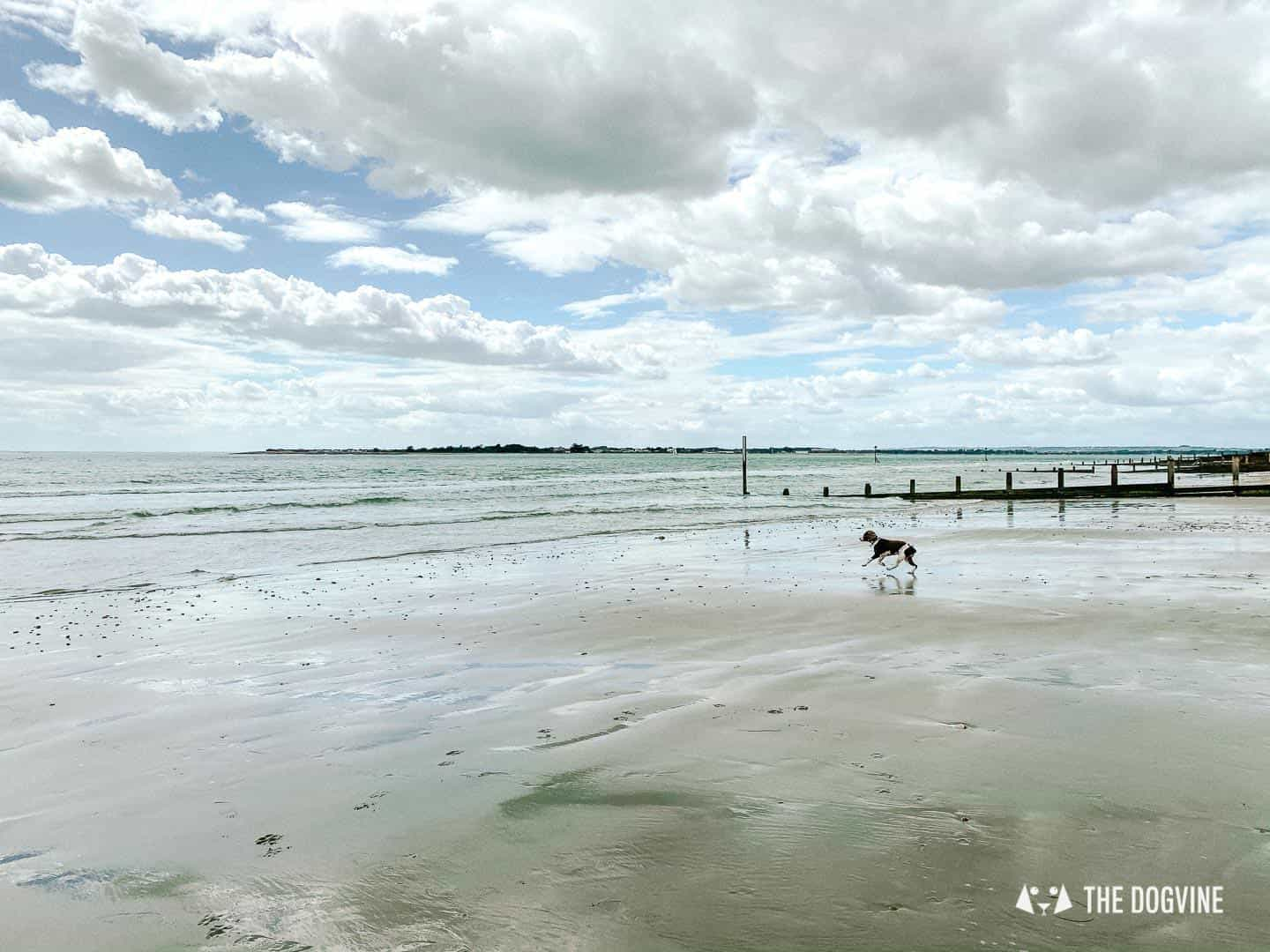 Dog-friendly West Wittering Beach