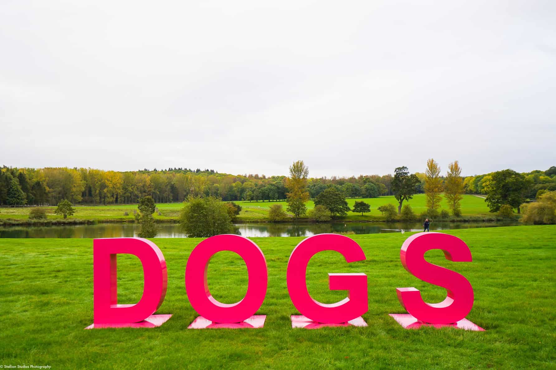 Virtual Big Dog Walk 2020