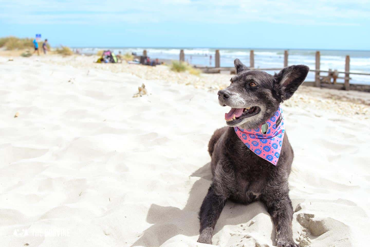 Visiting Dog-friendly West Wittering Beach With Your Dog