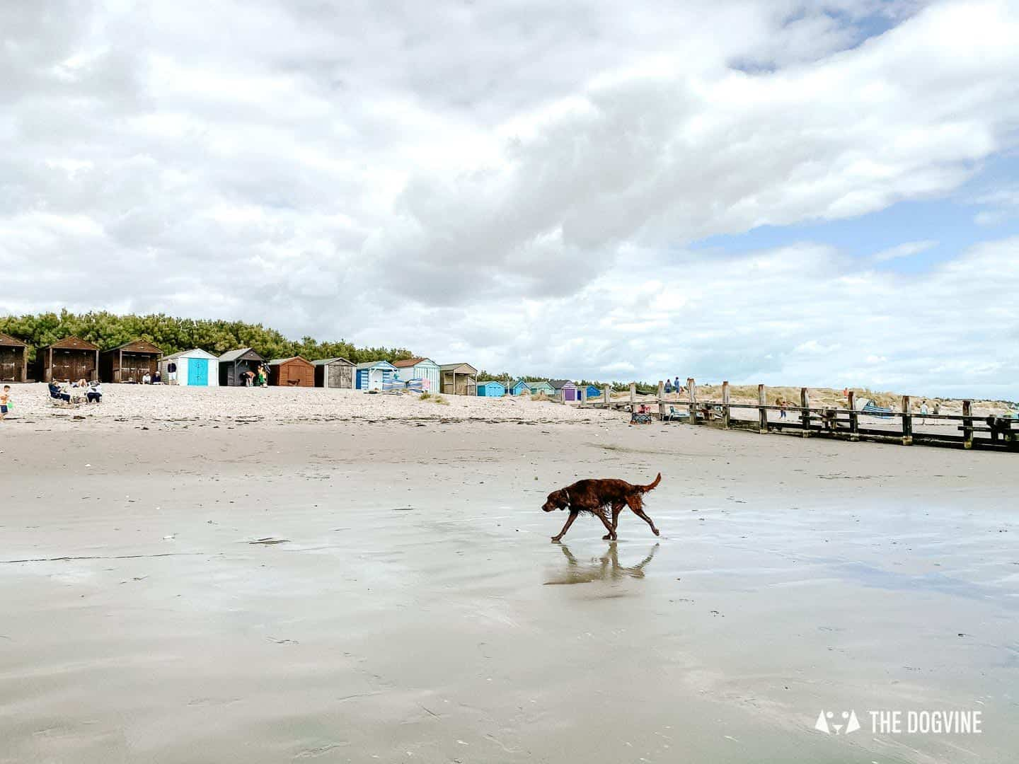 Walking on dog-friendly West Wittering Beach