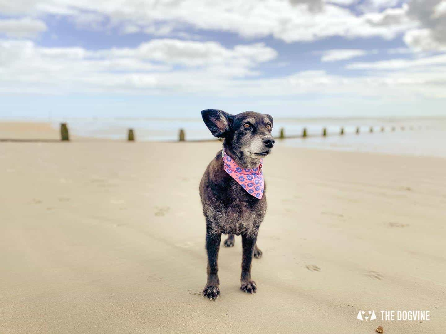 West Wittering Beach is dog-friendly and sandy