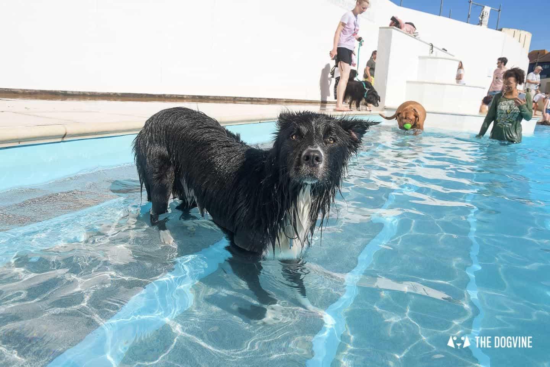 Saltdean Lido Dog Swim 2020 - 4