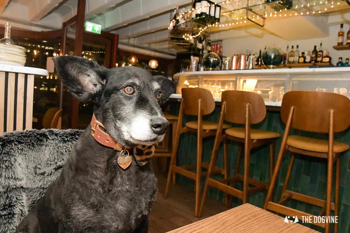 Dogs are welcome at The Melusine Restaurant St Katharine Docks